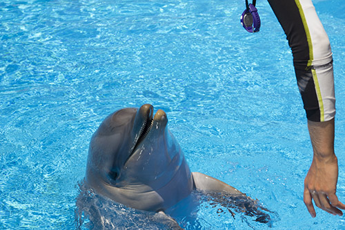 Animal Interaction: Dolphins, Sea Lions and Parrots