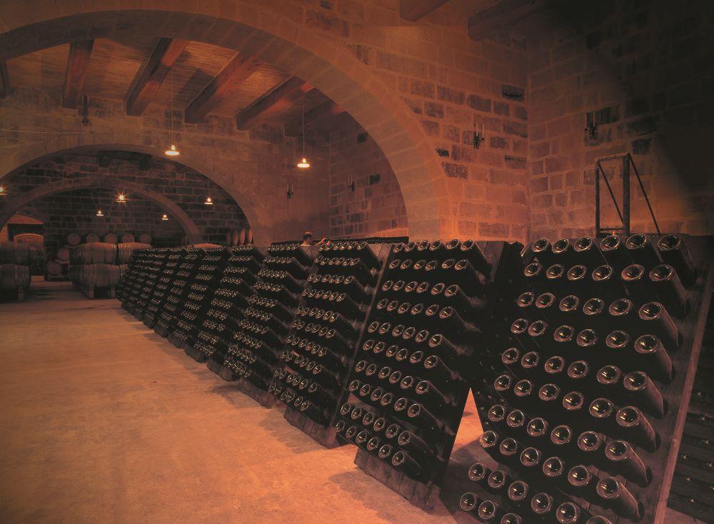 Wine cellar, wine bar and professional wine tasting