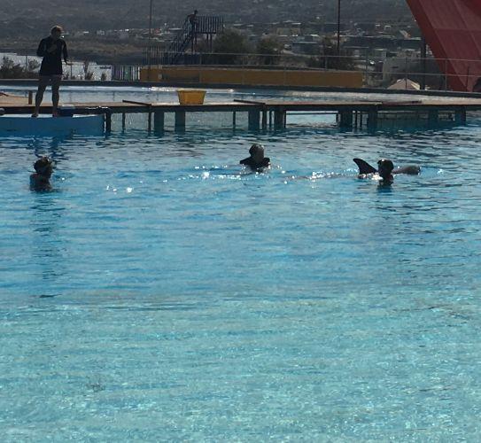 Nagez avec les dauphins